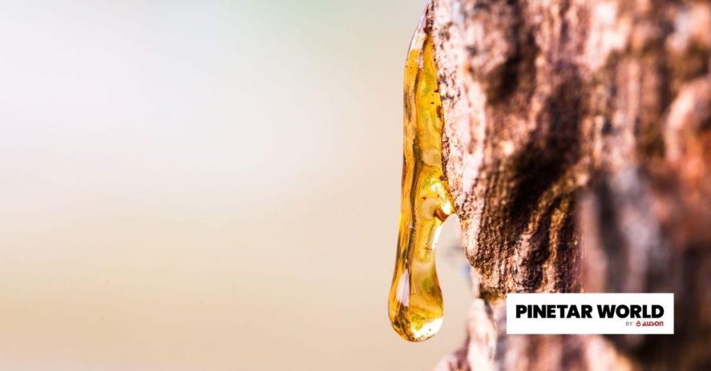 pine tar for sale